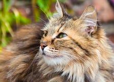 Halva vänd katt i mjuk fokus royaltyfria bilder