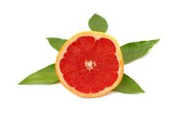 Halve grapefruit met bladeren Royalty-vrije Stock Foto's