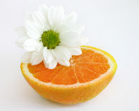 Halve sinaasappel met margriet Stock Afbeelding
