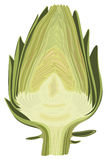 Halved artichoke Stock Photos