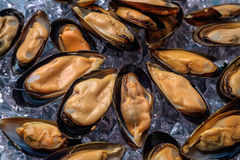 Halved fresh mussels on ice. Stock Photos