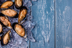 Halved fresh mussels on ice. Stock Image