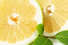 Halved green grapefruit Stock Images