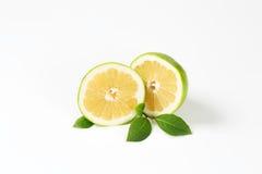 Halved green grapefruit Stock Photography