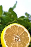 Halved lemon and mint Royalty Free Stock Photos