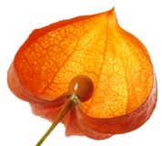 Halved chinese lantern Stock Photography