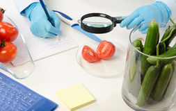 Halved tomato inspected in phytocontrol laboratory Royalty Free Stock Photos