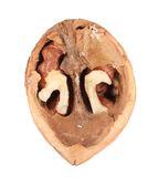 Halved walnut. Royalty Free Stock Image