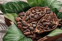 Halves of cocoa pod with beans in crate royalty free stock image