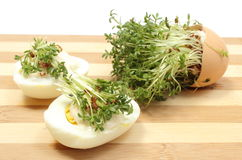 Halves of egg fresh cress. Halves of egg with mayonnaise and fresh green cress, fresh cuckoo-flower in eggshell lying on wooden cutting board, watercress, Easter Royalty Free Stock Photos