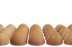Halves of the eggs. With brown shells against white background Royalty Free Stock Image