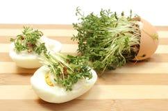 Free Halves Of Egg Fresh Cress Royalty Free Stock Photos - 39027038