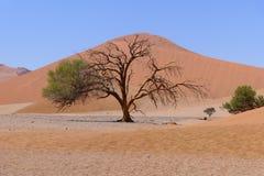 Halvt alifeträd arkivbild
