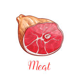 Ham meat isolated sketch with smoked pork leg Stock Images