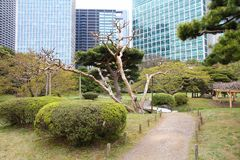 Hama Rikyu Garden Stock Photography