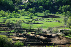 Hamaba no prado de Mulan Fotografia de Stock Royalty Free