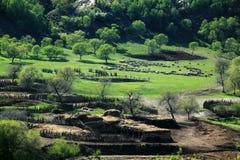 Hamaba in Paddock Mulan Royalty-vrije Stock Fotografie