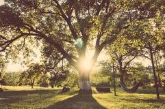 Hamac dans le jardin Photographie stock libre de droits