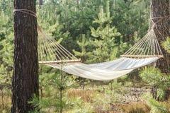 Hamac de tissu dans la forêt de pin Images stock