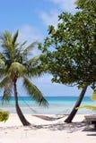 Hamac suspendu entre les palmiers par l'océan Images libres de droits