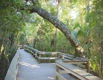 Hamac tropical de bois dur Photo libre de droits