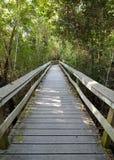 Hamac tropical de bois dur Images libres de droits