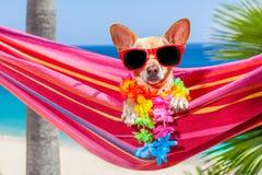 Hamaca del verano del perro Fotos de archivo