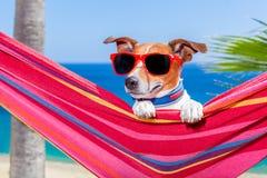 Hamaca del verano del perro Imagen de archivo libre de regalías