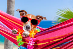 Hamaca del verano del perro Fotografía de archivo libre de regalías
