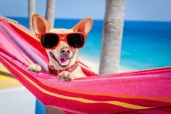 Hamaca del verano del perro Fotografía de archivo