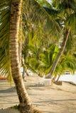 Hamaca tropical de la playa imagen de archivo libre de regalías