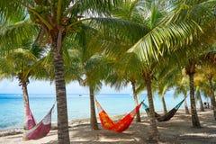 Hamacas de la palmera de la playa de la isla de Cozumel fotos de archivo