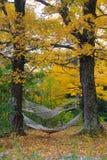 Hamacas entre los árboles del otoño Fotografía de archivo