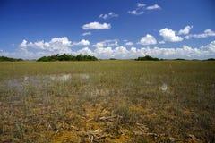 Hamacs tropicaux Photos libres de droits