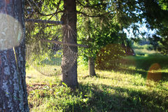 Hamak natury zieleń Zdjęcie Stock