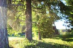 Hamak natury zieleń Obraz Royalty Free