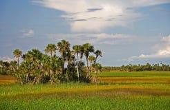 hamak palma zdjęcie royalty free