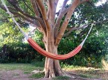 Hamak w dębowym drzewie Zdjęcie Royalty Free
