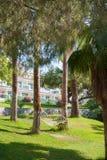 Hamak wiążący na drzewkach palmowych, odpoczynek w cieniu obrazy royalty free