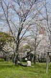 Hamani picnic - Sakura Royalty Free Stock Image