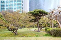 Hamarikyu Gardens Royalty Free Stock Image