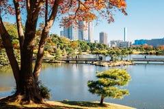 Hamarikyu ogródów staw i jesień klon w Tokio, Japonia fotografia stock
