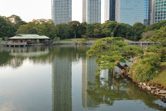 Hamarikyu Zen  garden. Very famous Hamarikyu Zen garden  in Tokyo Japan; focus on pine tree Royalty Free Stock Photo