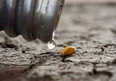 Hambre sin agua de la pista Imagen de archivo libre de regalías