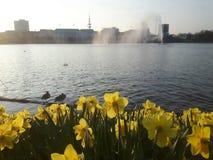 Hamburg Alster Royaltyfria Bilder
