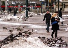 01 02 2011, Hamburg, Deutschland Architektur von Europa Stadtbilder von Hamburg im Winter Lizenzfreies Stockfoto