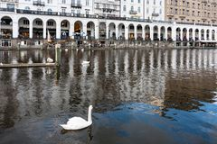 Swan and waterfront of Binnenalster in Hamburg. HAMBURG, GERMANY - SEPTEMBER 15, 2017: swan and view of Arcades on waterfront of Binnenalster Inner Alster Lake Stock Images