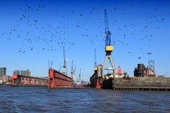 Hamburg harbor. Port of Hamburg, Germany. Ominous black birds royalty free stock photos