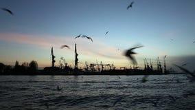 Hamburg harbour, Germany stock video footage