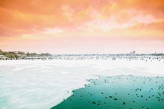 Hamburg, ice covered Aussenalster during winter Royalty Free Stock Photo